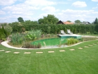 Vodné rastliny do jazierka