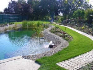 Jazierko v záhrade