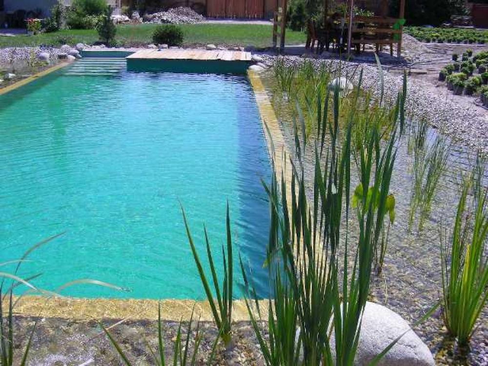 Bio schwimmbad und schwimmteich for Fische im schwimmteich