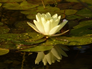 Bio jazierko, záhradné jazierka