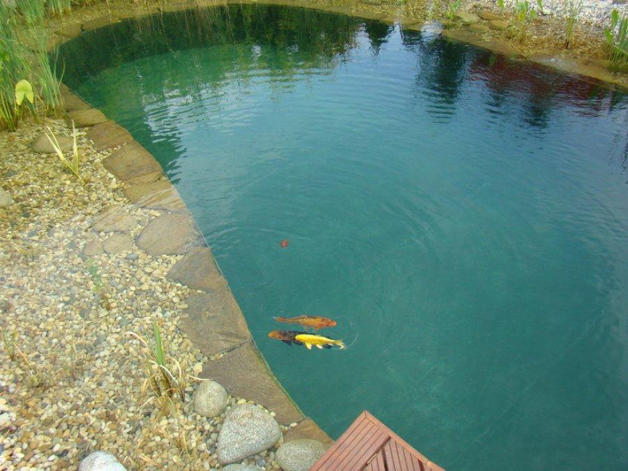 Schwimmteich for Fische im schwimmteich